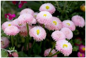 Pink Flowers Names And Picture 31 Hd Wallpaper ...