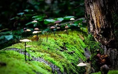 Moss Macro Mushroom Nature Forest Mushrooms Wallpapers