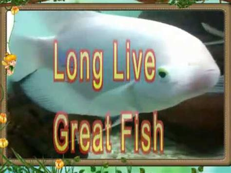 worlds biggest white molly fish youtube