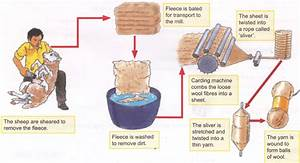Process Of Obtaining Wool From Sheep