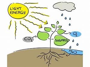 Photosynthesis  The Dream Of Renewable Energy