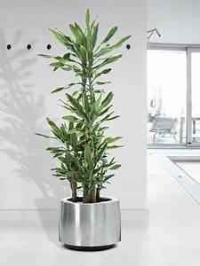 Plante D Extérieur En Pot : pic photo grande plante ext rieur en pot pic de grande ~ Dailycaller-alerts.com Idées de Décoration