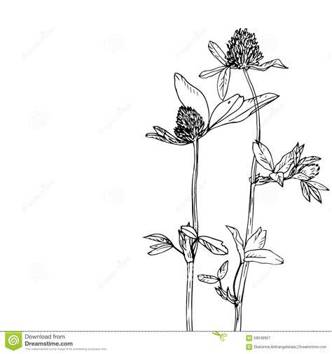 floral composition  clover stock vector illustration