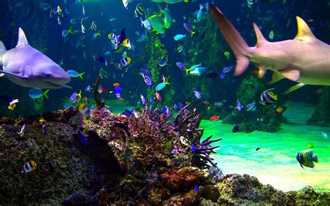 Ocean Screensaver On The Mac App Store