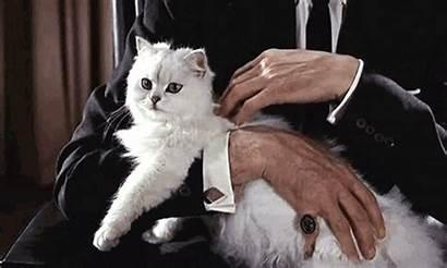 Cat Bond Cats Moore Roger Stroke James