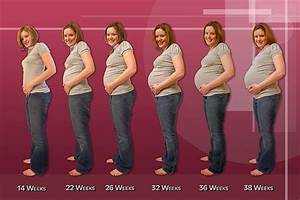 The Three Trimesters Of Pregnancy U2026