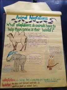3rd Grade Science Animals