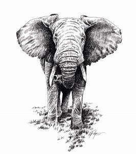 AFRICAN ELEPHANT Wildlife Art Print Signed by by k9artgallery