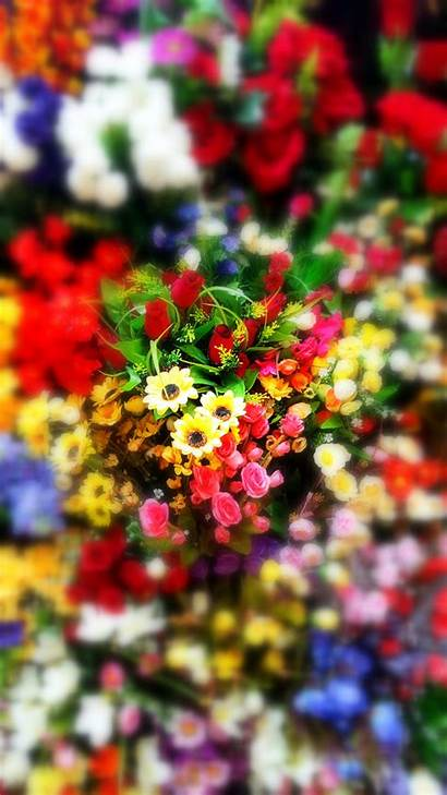 Phone Wallpapers Floral Flower Mobile Garden Backgrounds