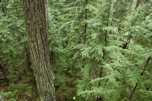 vancouver big tree hiking guide your ecological and practical guide to local
