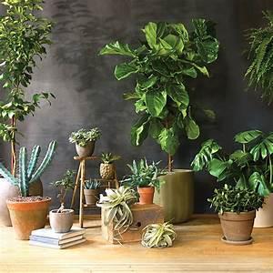 11, Gorgeous, Super-low-maintenance, Indoor, Plants