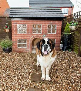 dog owner spends gbp1800 building a kennel which is an With saint bernard dog house