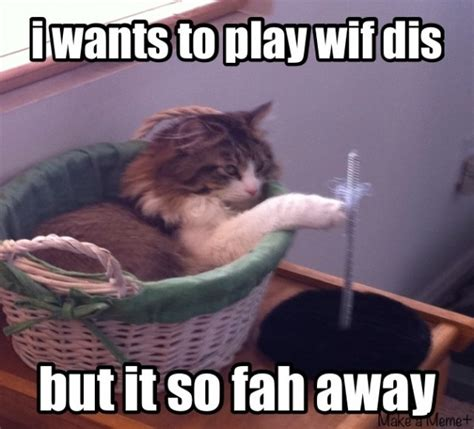 Lazy Cat Meme Lazy Cat Wants To Play Meme
