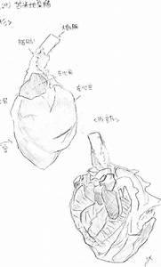 Pig Heart Drawing At Getdrawings