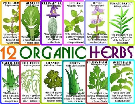 10 Things You Should Know About Organic Garden Seeds and ...