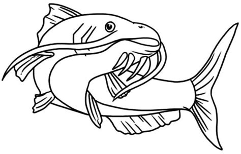 catfish  coloring page supercoloringcom sketch coloring page