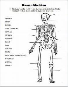 the skeletal system hands on learning resources human With science interactive notebooks electrical circuits workgettin39 my