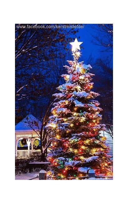 Christmas Tree Lights Outside Snow Scene Yard
