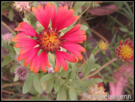 flowers for and summer summer flowers and plants home garden glimpses femmehavenn