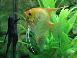 Großes Aquarium Kaufen : aquarium fische bersicht ber die wichtigsten arten ~ Frokenaadalensverden.com Haus und Dekorationen