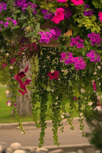 beautiful hanging basket around the house quot outside