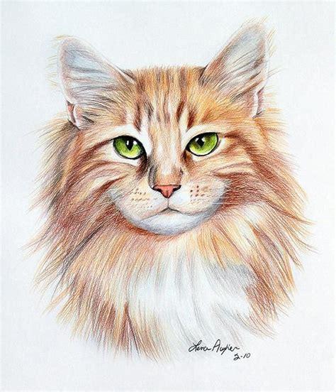 Cat Drawings 14