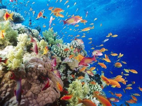 What Are The Most Beautiful Coral Reefs In The World? Quora
