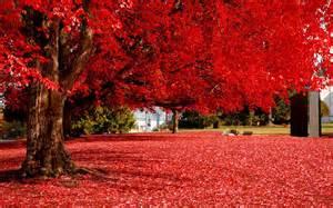 Beautiful Red Autumn Tree
