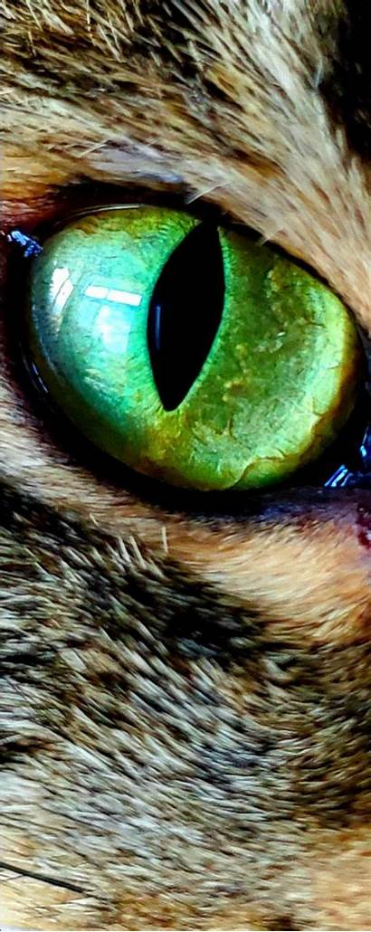 Eye Cat Navigation