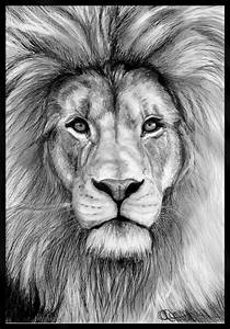 lion head drawing | Summer Refs 2013 | Pinterest ...