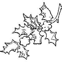 christmas holly leaf templates  crafts graphics