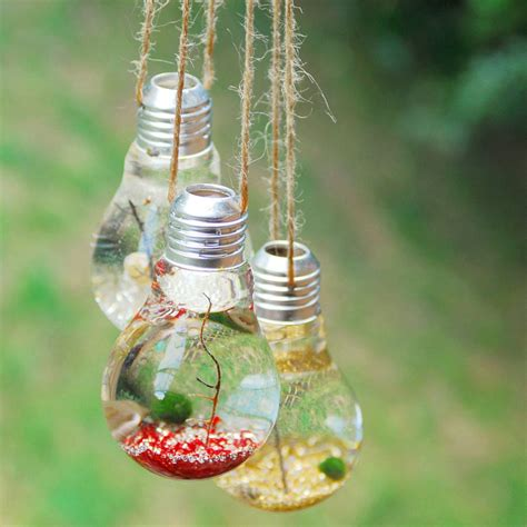hanging lightbulb marimo moss terrarium by dingading