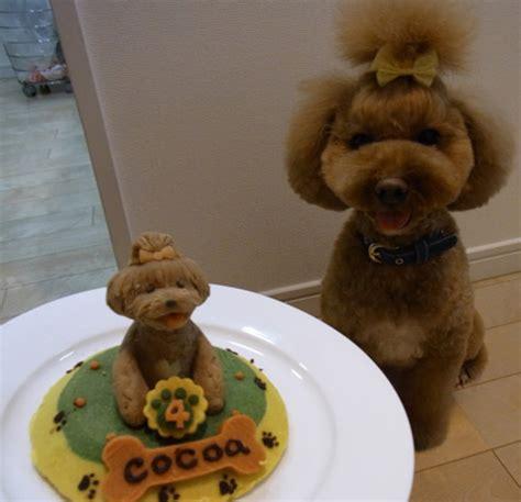 birthday cakes  dogs neatorama