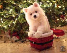 what s more photogenic than a puppy in a basket in front of a christmas tree description from