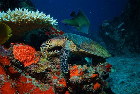 Boat Tours Seychelles by Information About Snorkelling In The Seychelles