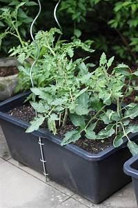 Tomaten Im Hochbeet : hochbeet im m rtelkasten anlegen the inspiring life ~ Whattoseeinmadrid.com Haus und Dekorationen