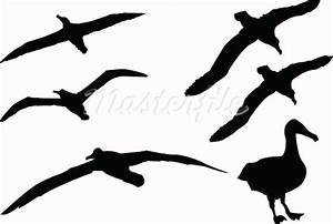 Albatross Clipart