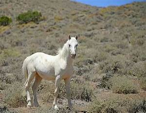 White Mustang Horse | www.imgkid.com - The Image Kid Has It!