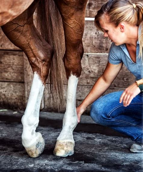 joint equine injection injections aftercare instructions osteoarthritis complications therapy