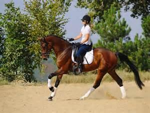 Escuela Española de Equitación, visitas, horarios, precios ...