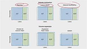 Water Shifting Between Fluid Compartments  U0628 U0627 U0644 U0639 U0631 U0628 U0649