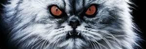 katzenschreck katzen vertreiben mit system With französischer balkon mit katzen garten vertreiben