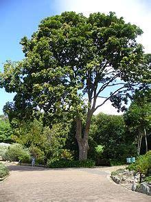 mahogany wikipedia
