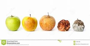 Five Apples In Various States Of Decay Stock Photo - Image ...