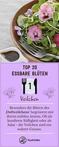 Welche Blumen Kann Man Essen : unsere top 20 essbaren bl ten essbare bl ten essbare ~ Watch28wear.com Haus und Dekorationen