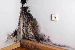 Schimmelpilz Im Bad : schimmel entfernen schimmelpilz schnell beseitigen so geht s ~ Markanthonyermac.com Haus und Dekorationen
