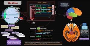 Educative Diagrams  Vision Diagram