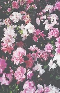 vintage rose wallpaper | Tumblr