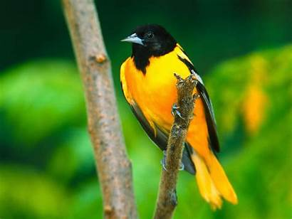 Birds Mela