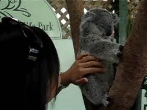 funny animal gifs part 11 10 gifs amazing creatures